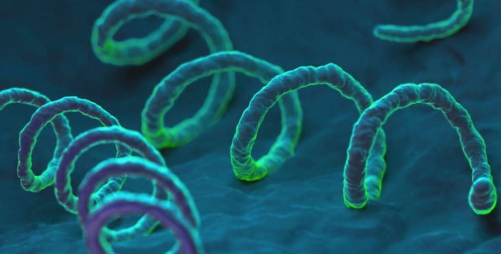 Bacteria causante de la sífilis