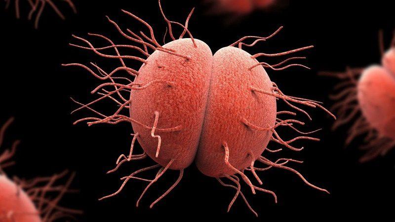 gonorrea, Tratamientos para la gonorrea, ¿qué pasa si no se diagnostica a tiempo?